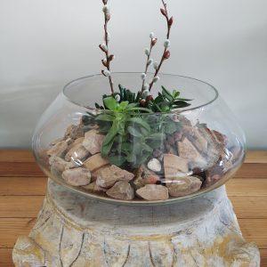 Live Plants & Terrariums